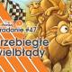 #47 - Przebiegłe wielbłądy small